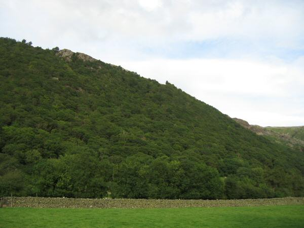 The steep woodland above Stonethwaite on the side of Great Crag