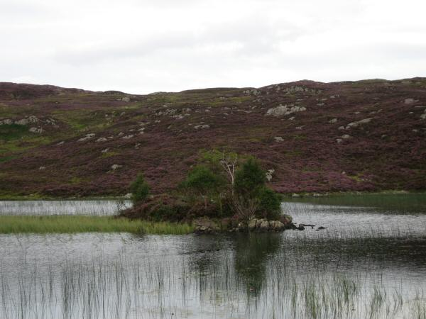 The island in Dock Tarn
