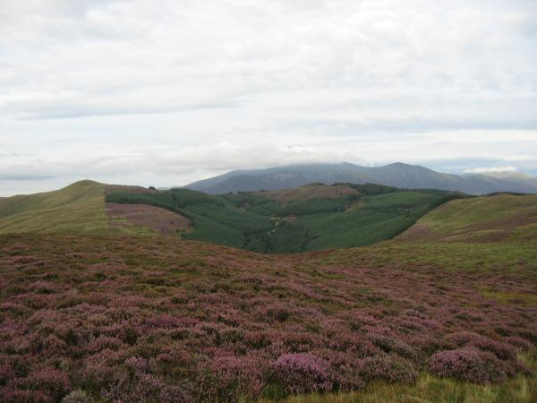 Lord's Seat and Ullister Hill with the Skiddaw fells behind