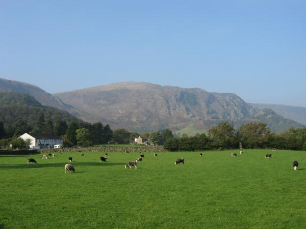 Looking across the fields near Stonethwaite to High Spy