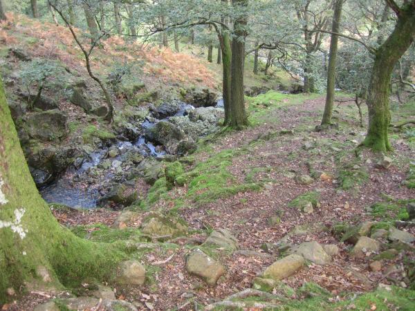 Looking back down the path through the woods next to Big Stanger Gill