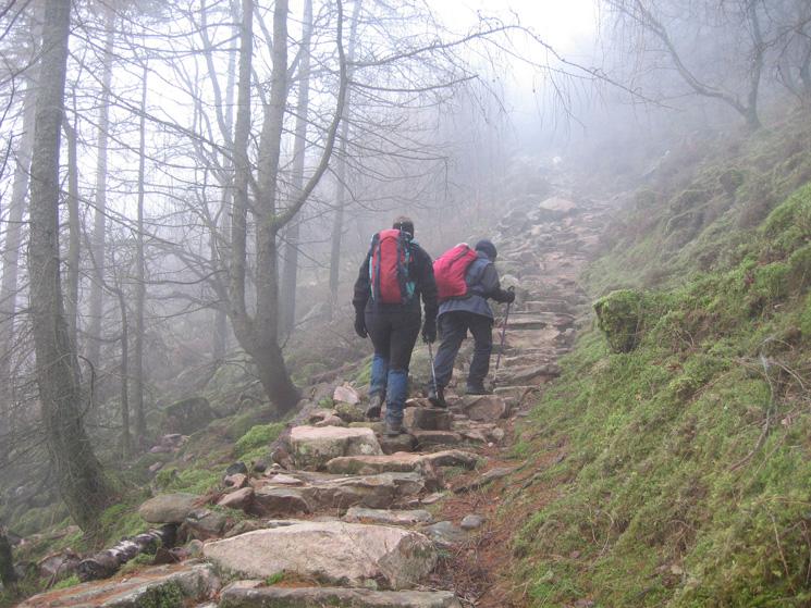 Ascending the path through Burtness Wood