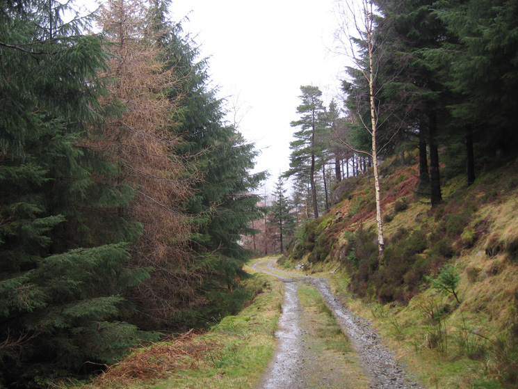 Forest track above Shoulthwaite Gill