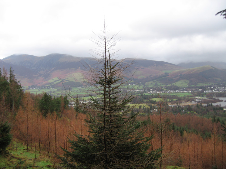 The Skiddaw Fells and Keswick from the ascent through the trees of Swinside