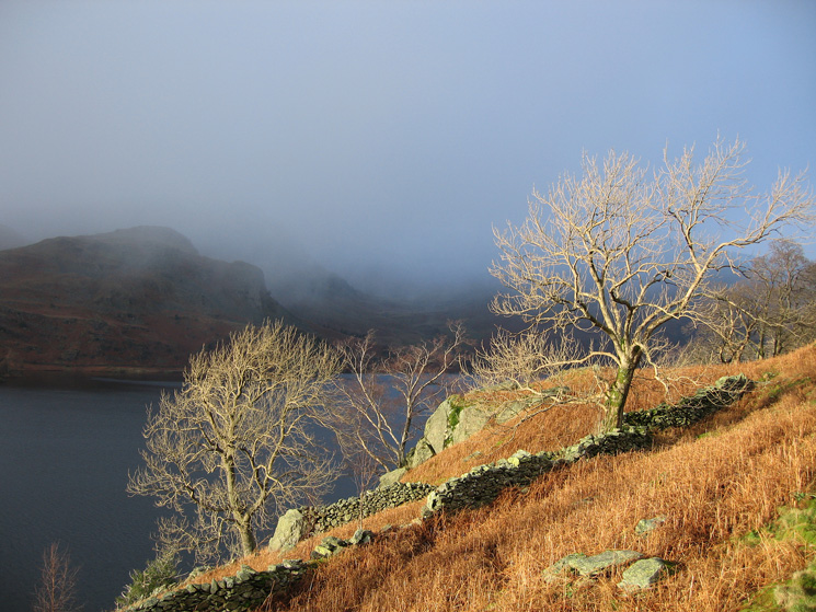 Trees catching some sunlight with Castle Crag on the far side of Haweswater