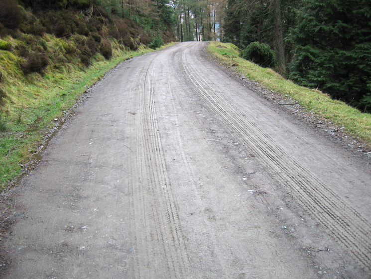 Track in Whinlatter Forest