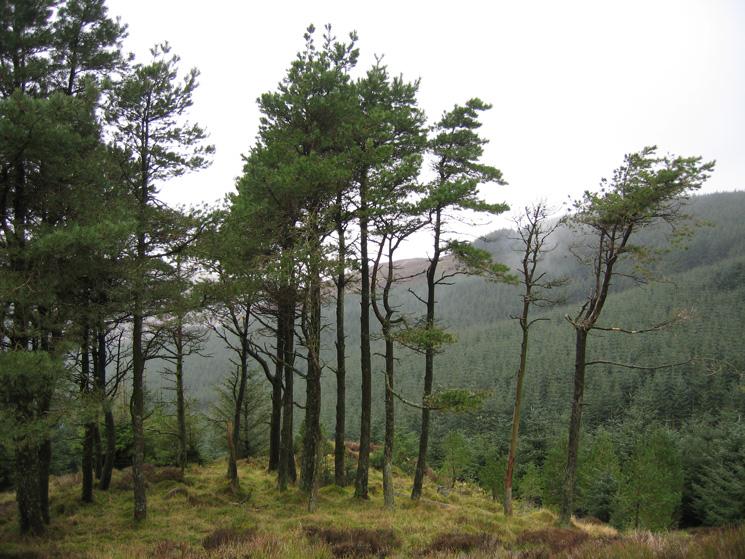 In Whinlatter Forest