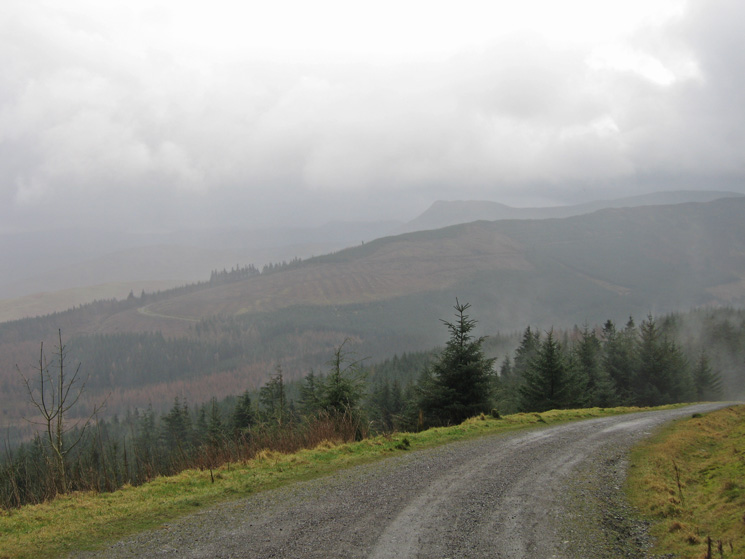 Causey Pike in the distance from Whinlatter Forest