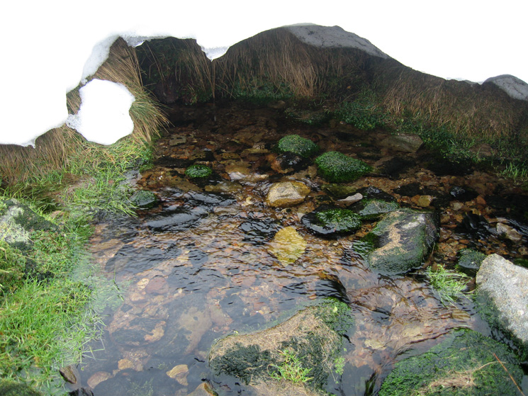 Whelpside Gill Spring (Brownrigg Well)