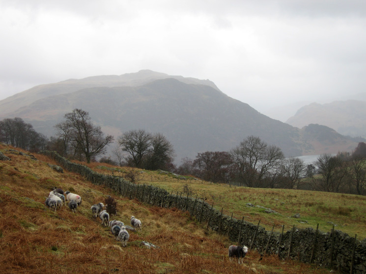 Looking across towards Place Fell from our ascent