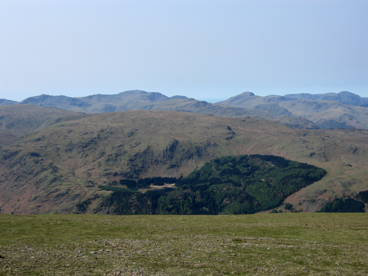 Looking over Ullscarf and the woods around Harrop Tarn to Bowfell, Scafell Pike, Great Gable and Pillar from Helvellyn's summit