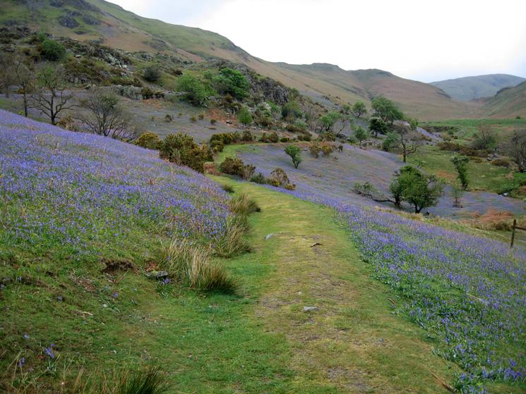 The main path through the bluebells