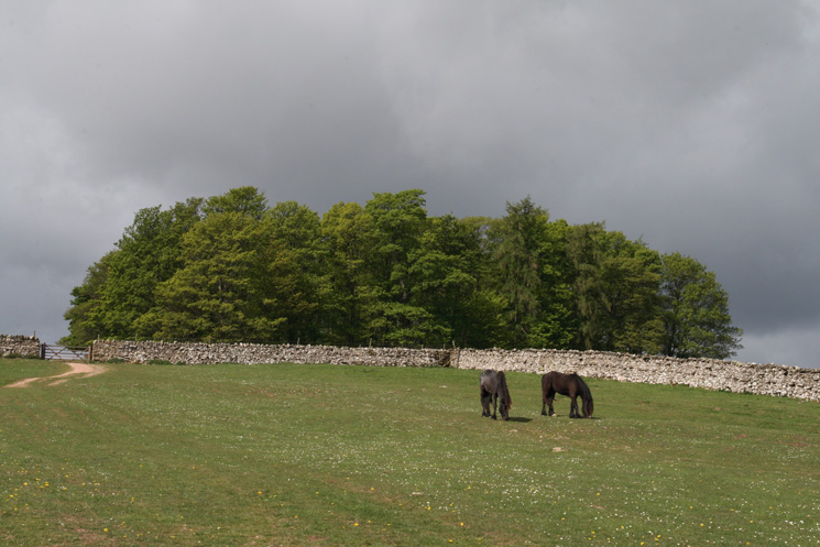Woodland near Riggingleys Top