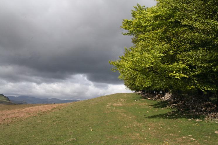 Passing the woodland near Heughscar Hill's summit