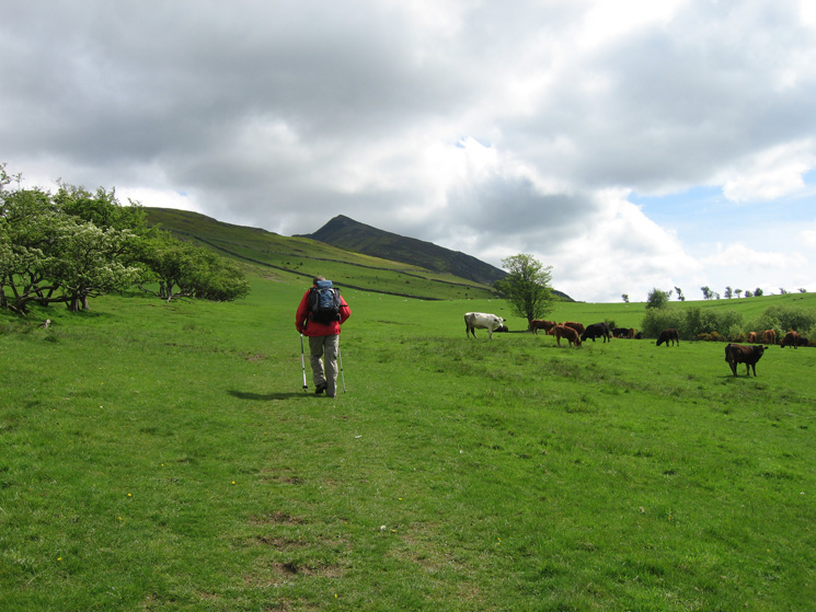 Heading through the fields above High Side with Ullock Pike ahead