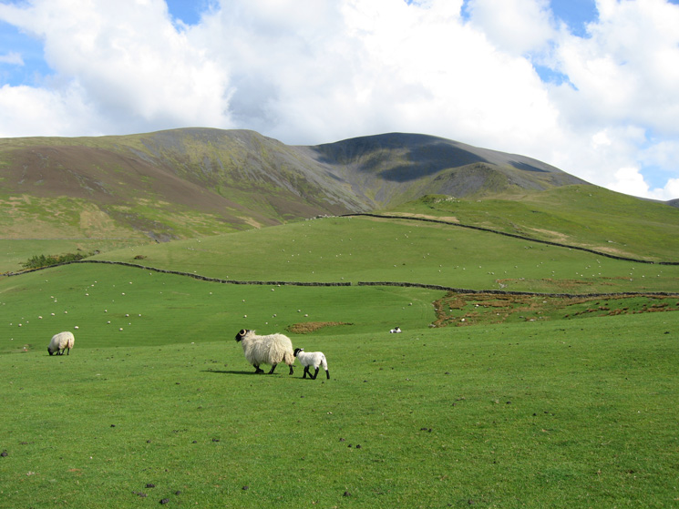 Skiddaw from the fields above High Side, our line of acent is by Randel Crag (just below the the right end of the shadow)