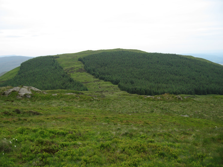 Mabbin Crag, the path goes up the fire break between the two section of plantation