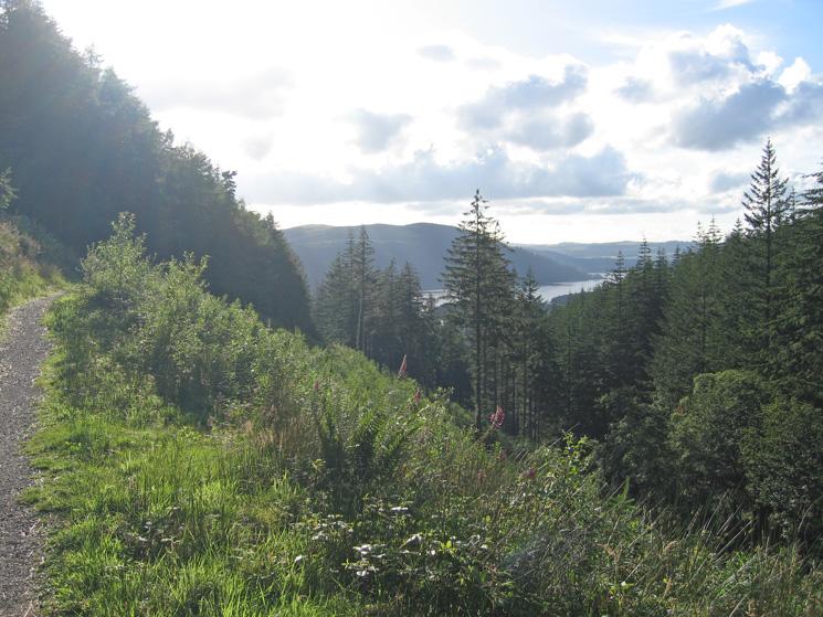 A glimpse of Bassenthwaite Lake as we head back down through Dodd Wood to the Mirehouse tea room