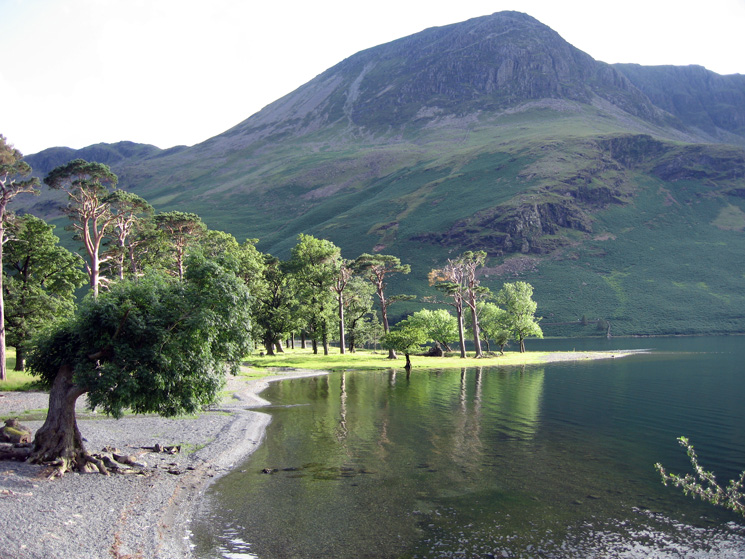 The Buttermere Pines and High Crag