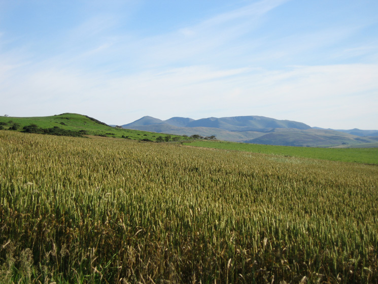 Looking south to the north western fells as I head for the ridge