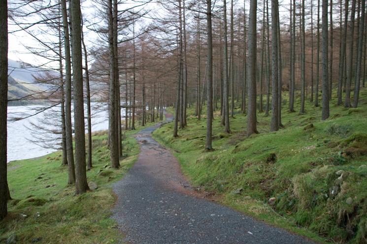 The path through Burtness Wood