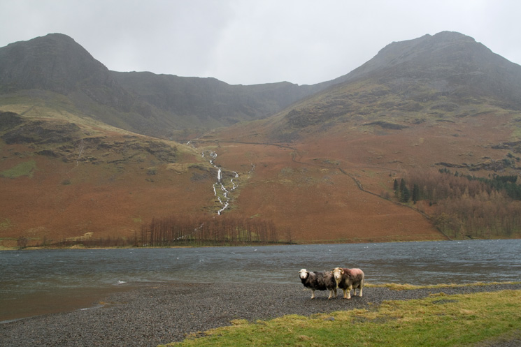 Looking across Buttermere to Burtness Comb with High Crag on the left and High Stile on the right