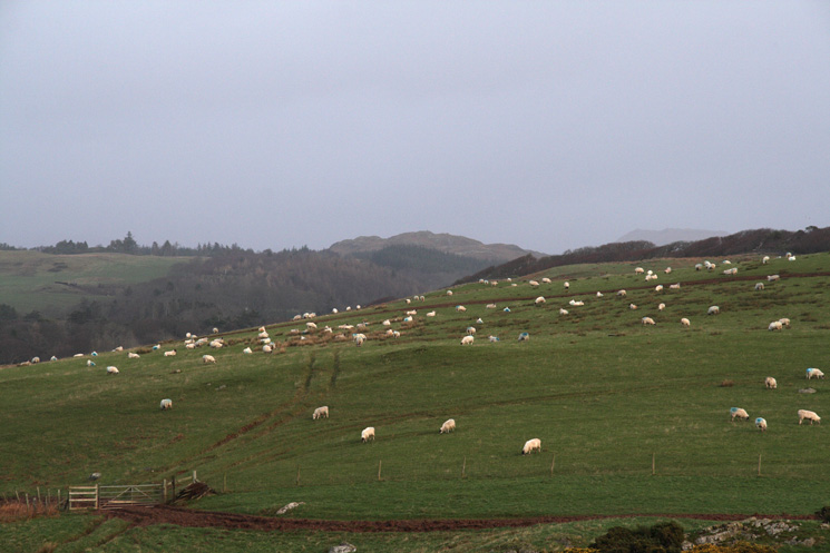 Looking north east from Newtown Knott to Muncaster Fell