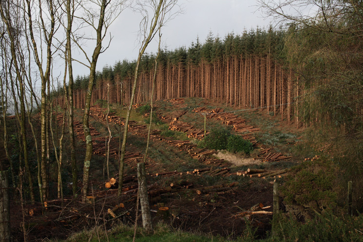 There is lots of forestry work going on near Muncaster Tarn