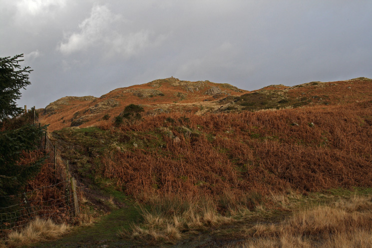 Hooker Crag the summit of Muncaster Fell from the corner of the wood