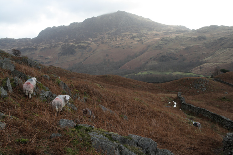 Harter Fell from above the Woolpack Inn