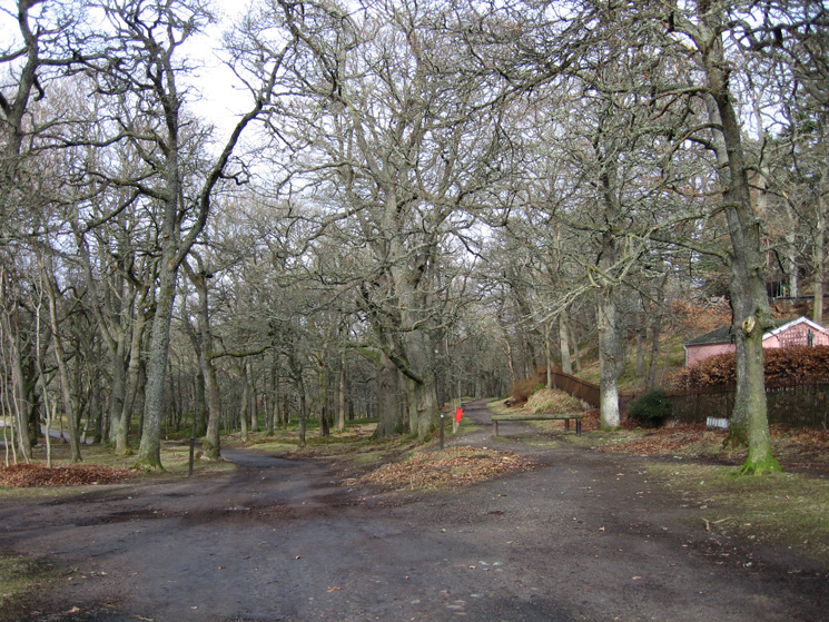 Entering the oak woodland as we leave Ballater