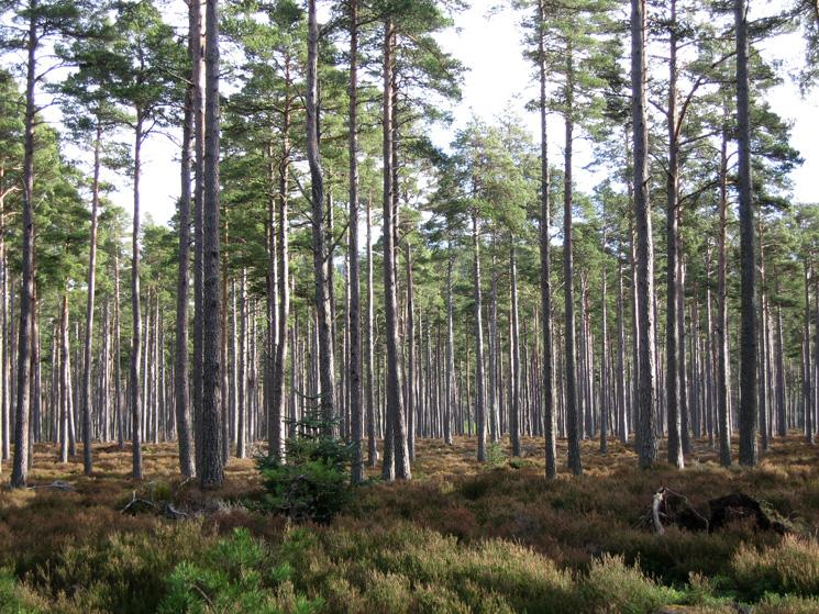 Dalhefour Wood