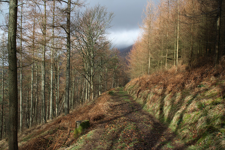Path through the woods on Latrigg's south eastern flank
