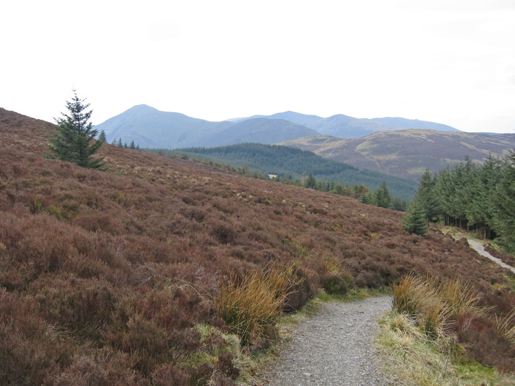 Grisedale Pike from Whinlatter Forest