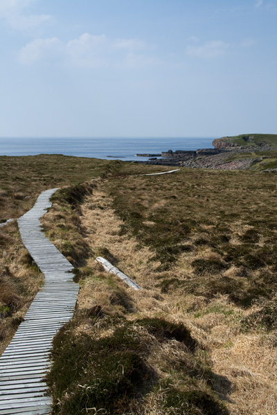 Boardwalk on Handa