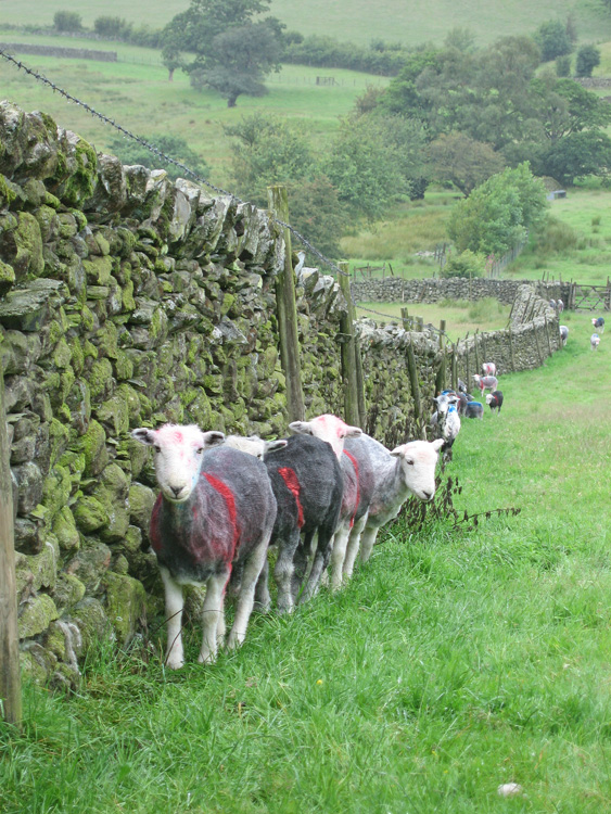 If only we had been allowed to keep our fleeces!
