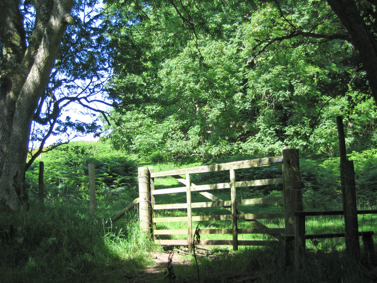 Leave the track at this gate / stile