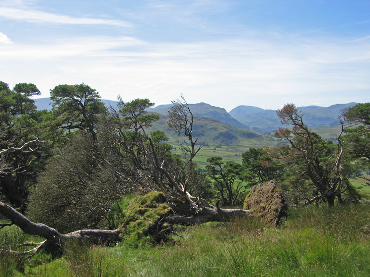 Place Fell and Red Screes from the upper woodland