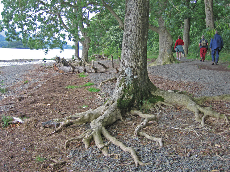 Derwent Water shoreline