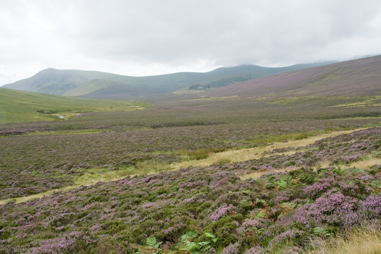 Lonscale Fell on the left, Skiddaw House in the trees below Skiddaw Little Man in the centre