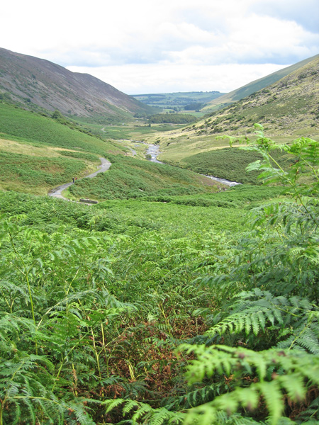 Head high bracken but there is a narrow path