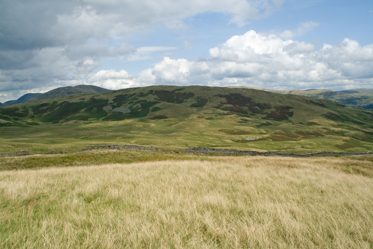 Sallows from Capple Howe