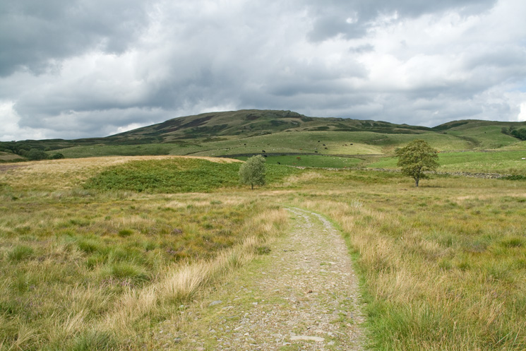 Sallows from the bridleway