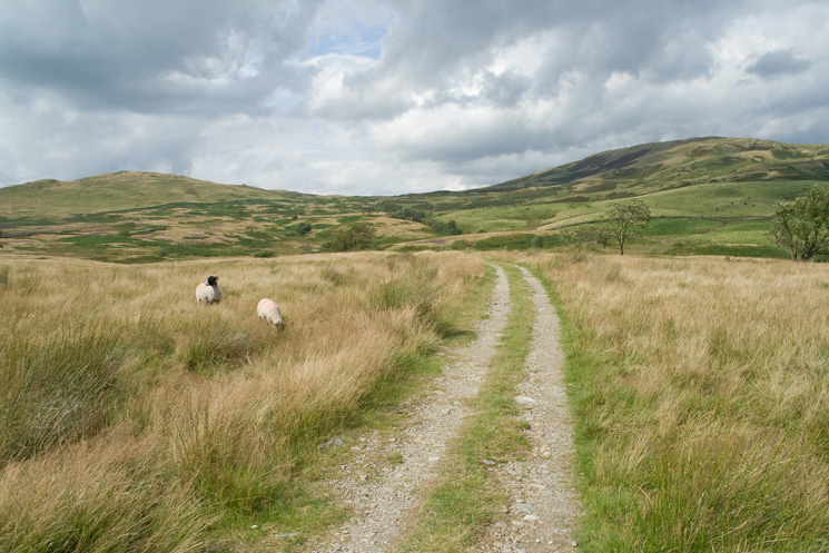 Looking back to Sour Howes and Sallows