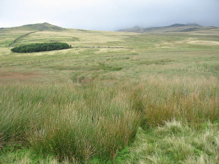 Looking back to Stoneside Hill having crossed what Wainwright calls a swamp
