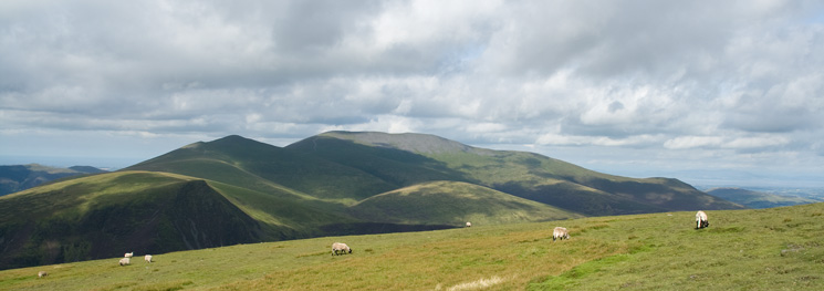 The Skiddaw fells from Blease Fell's summit