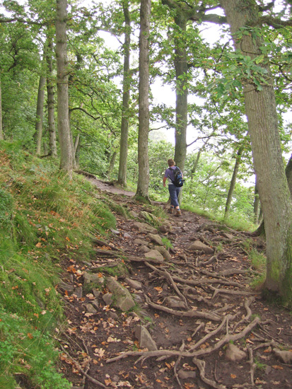 Walking through Hallinhag Wood