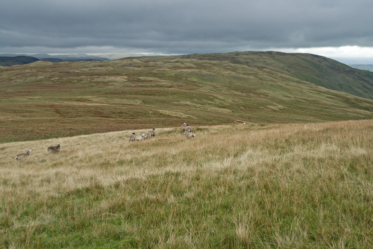 Long Crag is somewhere there with White Howe behind