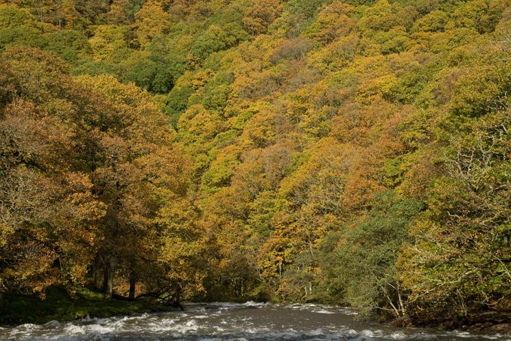 River Greta and Brundholme Wood