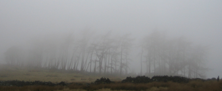 The stand of trees at Skiddaw House